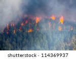 Raging Pine Tree Fire Across...