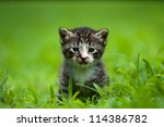 adorable little baby kitty - stock photo