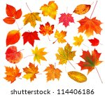 collection beautiful colorful autumn leaves isolated on white background - stock photo