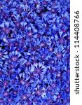 Beautiful spring flowers blue cornflower on background. Blue flowers pattern - stock photo