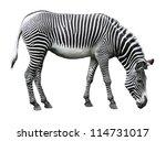 image of zebra isolated on... | Shutterstock . vector #114731017