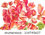 A Rosy Riot Of Red Geraniums I...