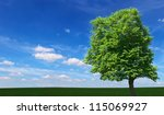 One oak tree on a meadow with grass. Ecology concept panorama with blue sky background - stock photo
