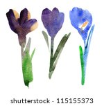 Tulips. Watercolor Painting On...