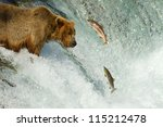 grizzly catching salmon - stock photo