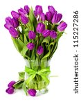 Purple tulips on white background - stock photo