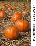 Ripe Pumpkins In A Farm Field...