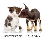 Stock photo the puppy looks at a kitten isolated on a white background 115357327