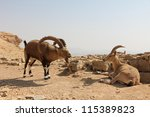 couple of desert deers | Shutterstock . vector #115389823