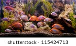 Stock photo a green beautiful planted tropical freshwater aquarium 115424713