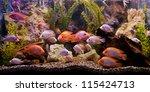 Stock photo a green beautiful planted tropical freshwater aquarium 115424713