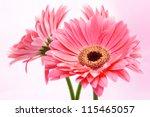 Three Red Gerber Flowers On...