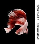 Siamese fighting fish, Betta fish on black background - stock photo