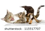 Stock photo the cat fights with a dog isolated on white background 115517707