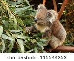 Koala  Phascolarctos Cinereus ...