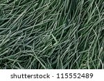 frosty grass - stock photo
