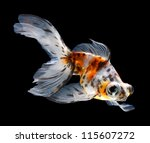 goldfish isolated on black background - stock photo