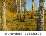 photo of birches in the autumn... | Shutterstock . vector #115626673