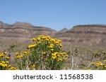 Spring In Mojave National...