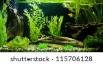 A green beautiful planted tropical freshwater aquarium - stock photo