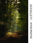 autumn forest | Shutterstock . vector #115735153