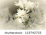 white floral background pattern - stock photo
