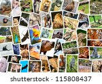 Different Animals Collage  On...