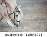 Chestnut horse feeding in the steppe - stock photo