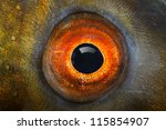 fish eye  the tench   tinca... | Shutterstock . vector #115854907