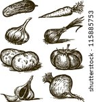 vegetables | Shutterstock .eps vector #115885753