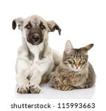 Stock photo the dog and cat lie together isolated on white background 115993663