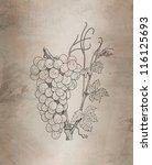 grapes illustration | Shutterstock . vector #116125693