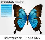 1,abdomen,animal,antenna,antennae,arthropod,background,biology,blue,body,bright,butterfly,diagram,drawing,ecology