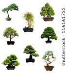 A set of miniature bonsai trees - stock photo