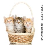 Three Small Kittens In A Baske...