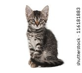 gray striped kitten with a clever grimace isolated white - stock photo