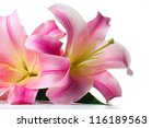Bouquet Of Large Pink Lilies...