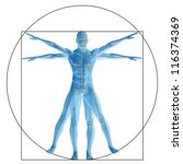 High resolution Vitruvian human or man as concept,metaphor or conceptual 3d anatomy body for biology,anatomical, Leonardo,proportion ,medicine,symbol,physiology,skeleton,health,humanity or morphology - stock photo