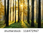 Stock photo beautiful morning scene in the forest with sun rays and long shadows 116472967