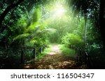 way in jungle of seychelles...   Shutterstock . vector #116504347