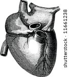 old time engraving of the heart | Shutterstock .eps vector #11661238