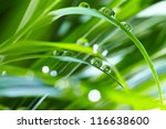 water drops on the green grass - stock photo