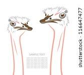 Ostriches   Vector Illustration