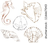 Shell Drawings