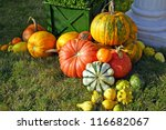 Colorful Pumpkins Collection
