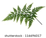 Fern Leaf Isolated Over White...