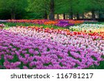 Bright Flowerbed In Keukenhof ...