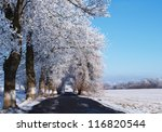 A road between trees covered with snow - stock photo