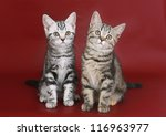 Kittens on burgundy background.