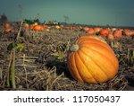 Pumpkins On A Field Under A...